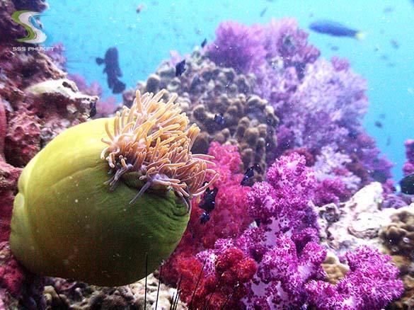 Shark Point Day Trip - anemone