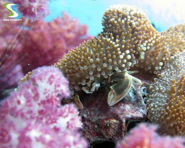 plongée à Anemone Reef - anémone 2