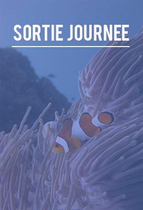 scuba diving sortie journée