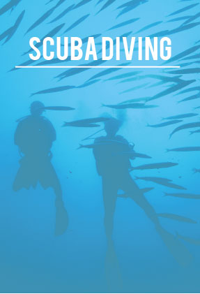 best dive center Scuba Diving in Phuket