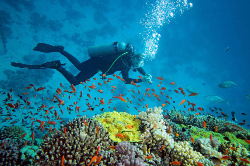 What to do in Phuket discovering marine environment