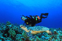 Racha Yai diving turtle