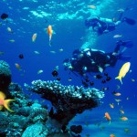 discover scuba diving diving phuket