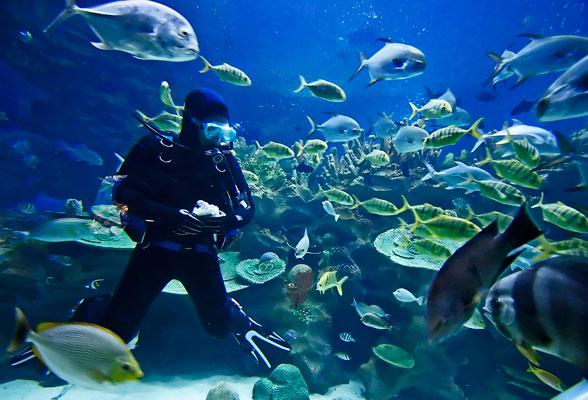 Phuket leisure activities - scuba diving