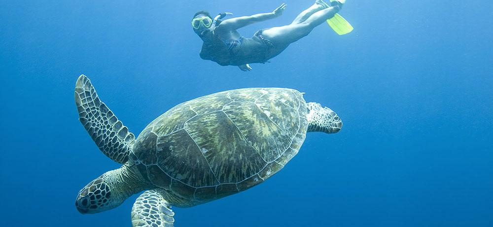 SSS Activités Phuket  snorkeling