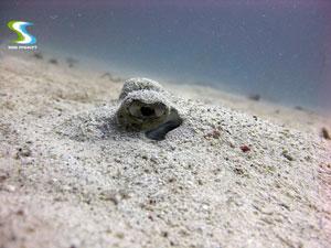 Similan Islands Snorkeling Trip