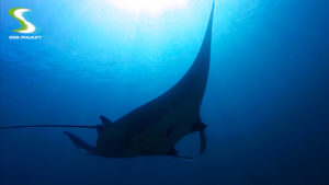 phuket scuba diving racha-noi-manta