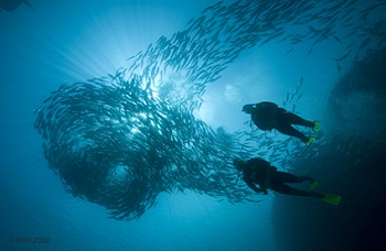 Phuket best dive center Padi Discover Scuba Diving