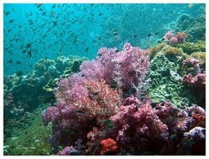 plongée à Phuket corail koh dok mai