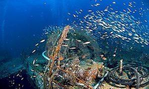 plongée à Phuket king-cruiser