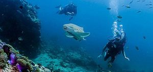 phuket scuba diving shark-point