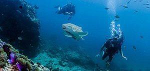 phuket scuba diving shark-point