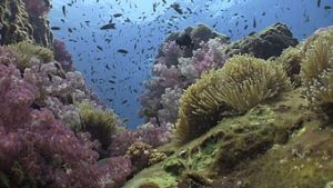 phuket scuba diving richelieu-rock
