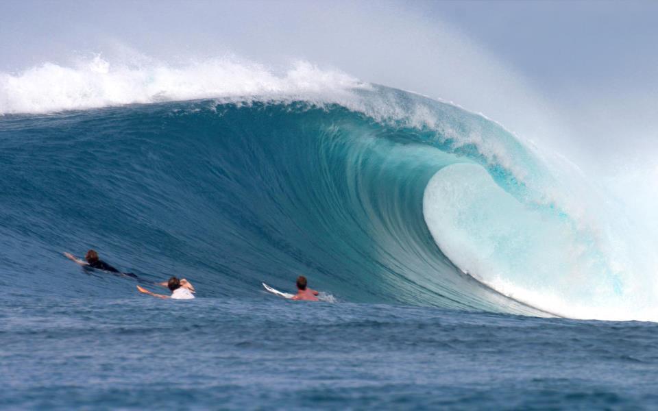 Buy Tail Pad Phuket | surf