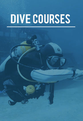Phuket Dive Tour
