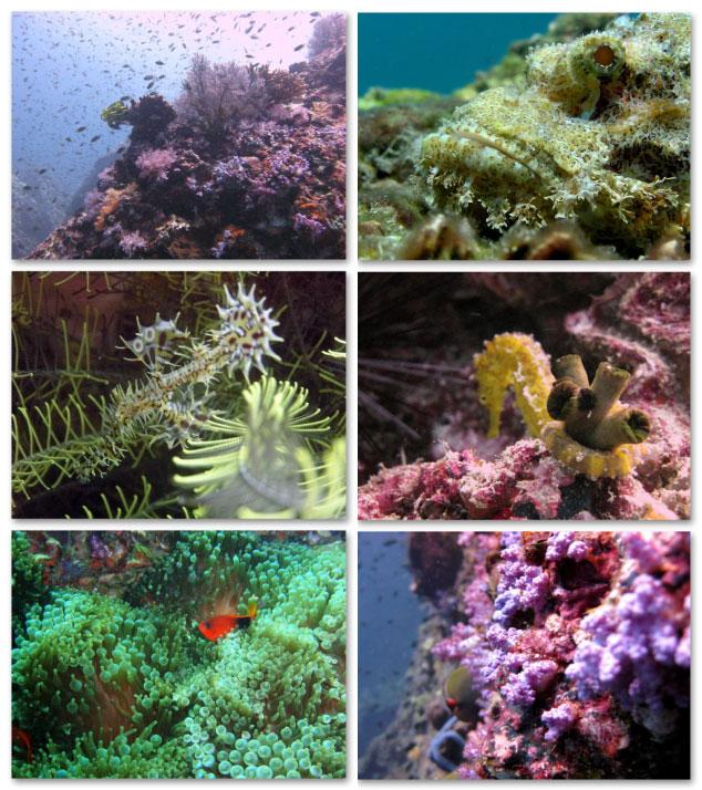 plongee Anemone Reef