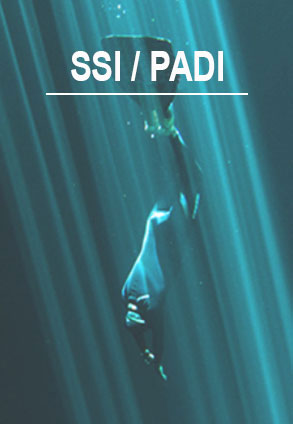 ssi freediving padi